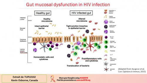 IAS 2019 gut mucosal dysfonction in HIV infection